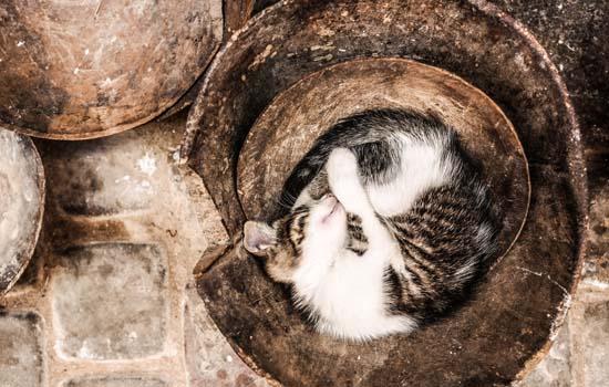 猫藓会复发吗