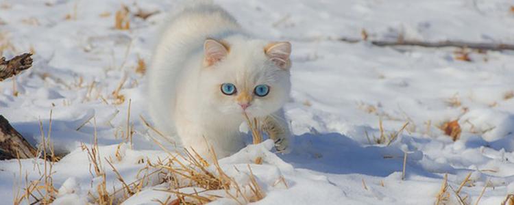 猫咪呕吐怎么回事