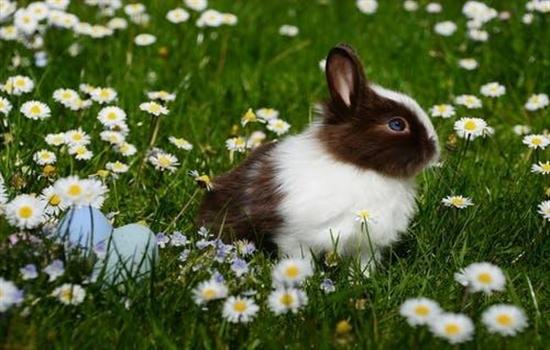 兔子中暑怎么办