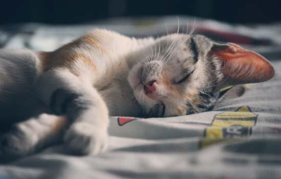 如何判断猫猫脑震荡