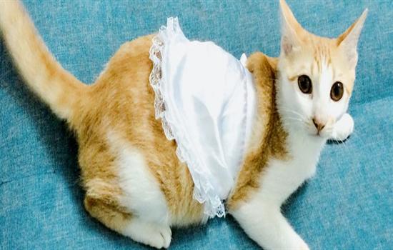 猫咪怀孕了可以吃化毛膏吗