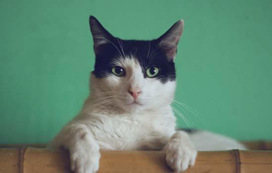 2个月小猫咪拉稀但精神很好