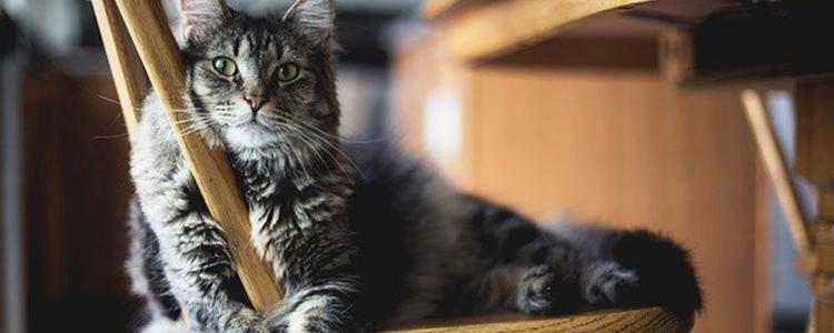 猫贫血严重怎么补血最快