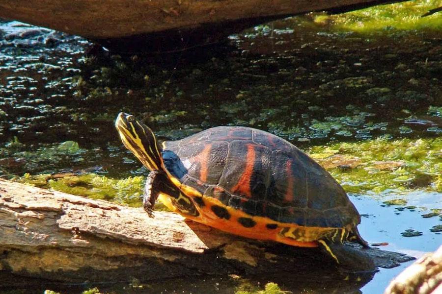 乌龟会被太阳晒死吗