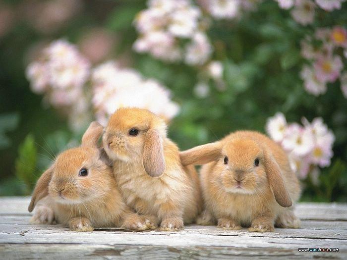 兔子能吃哈密瓜吗