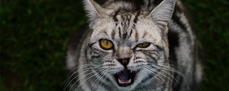 猫得了狂犬病有什么表现