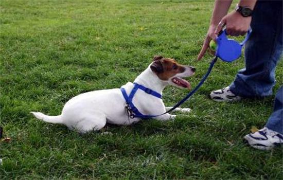狗狗活泼好动怎么训练