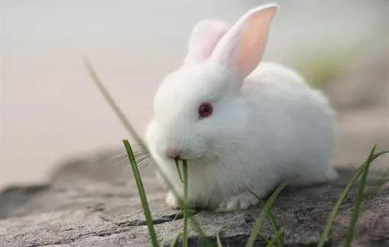 小兔子吃什么