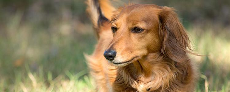 狗吃老鼠药怎么解救