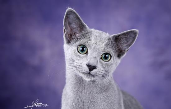 猫腹部皮肤颜色变紫不吃不喝