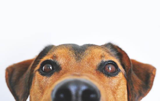 小狗咳嗽吐白色粘液怎么回事