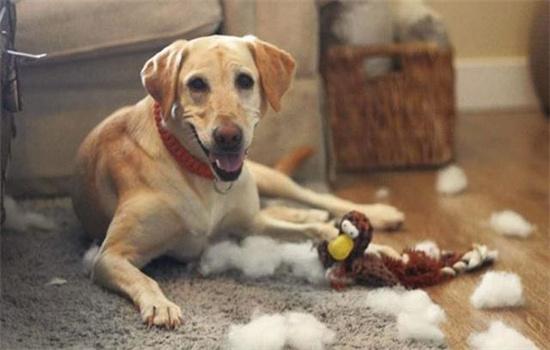怎么陪狗狗在室内玩耍