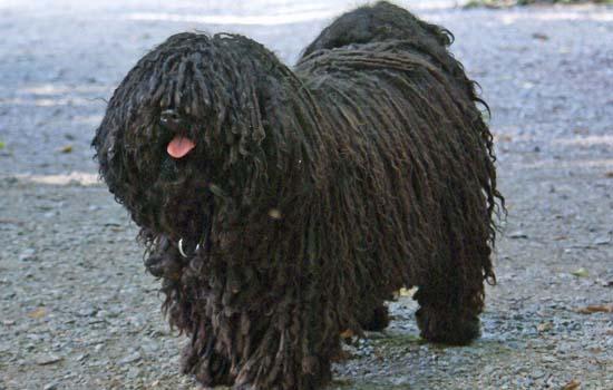 狗狗洗澡后多久可以体外驱虫