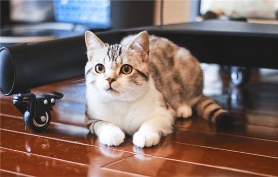 猫咪乱尿是什么原因