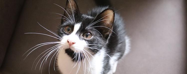 猫生小猫过程要几小时