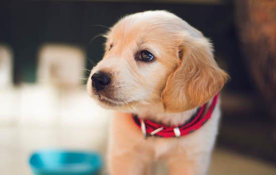 怎么教狗狗去卫生间大小便