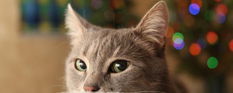小猫咪呕吐是怎么回事
