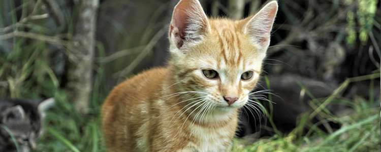 猫咪身上有虱子怎么办 怎么彻底消灭它们