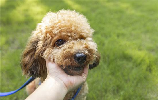 狗吐透明的粘液怎么办