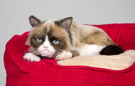 猫为什么会得肾肿大