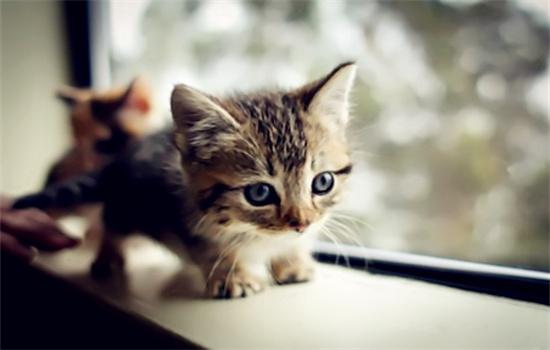 幼猫护食该不该打