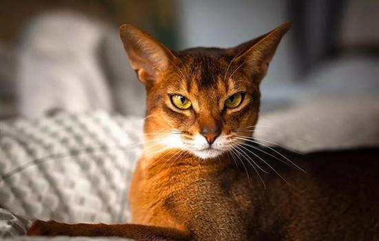 猫太闹腾怎么办