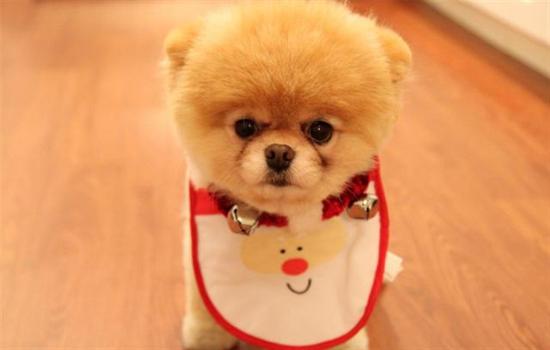 怎样给狗狗修毛