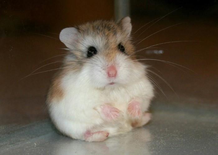 夏天养仓鼠需要准备什么