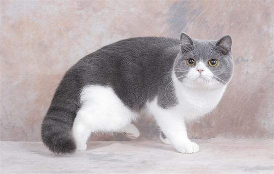 猫吃的生骨肉是什么肉