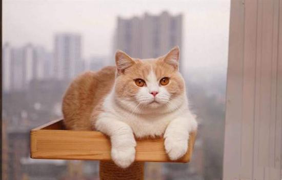橘猫的寿命有多长