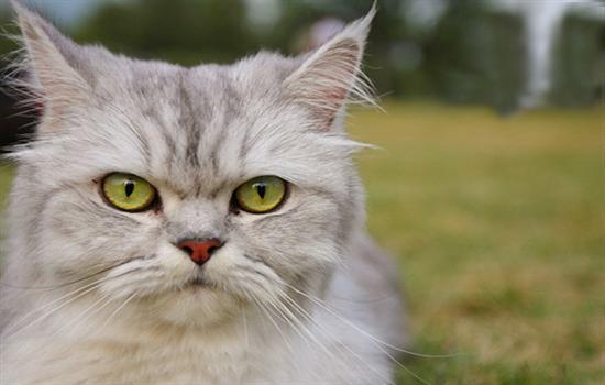 防止公猫乱尿的方法