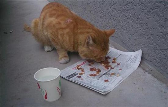 猫被抛弃了会怎么样