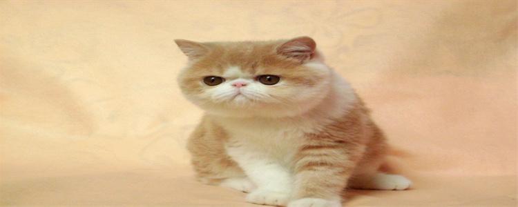 加菲猫寿命一般多少年