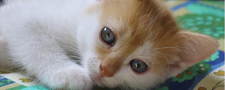 小猫应该吃什么东西