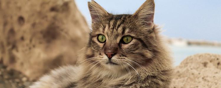 小猫挑食不吃猫粮怎么办