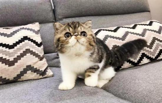 如何防止真皮沙发被猫抓