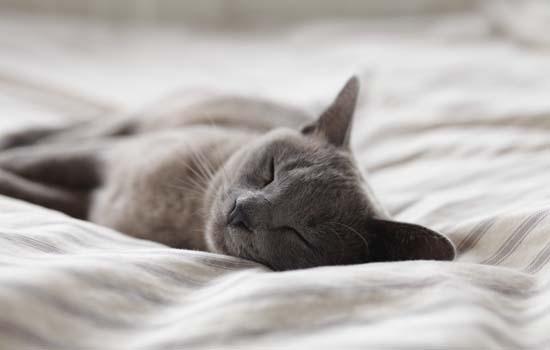 母猫配上的初期表现是什么
