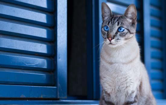 猫得猫癣怎么治好得快用什么药膏