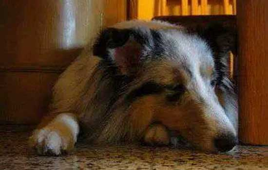 养狗技术和防治疾病