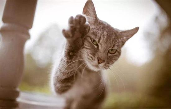 猫的记忆是多久
