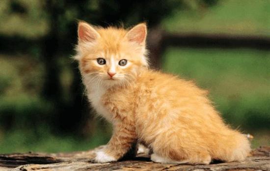怎么让猫咪记住自己的名字
