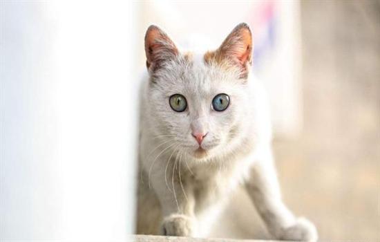猫一年相当于人几岁